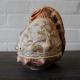 Handbewerkte grote schelp met voorstelling van musicerende vrouw. Lengte 16 (voor lampje)